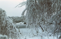 FotosRGES: Frost-on-trees-and-lake-[NL-2001]---KIH